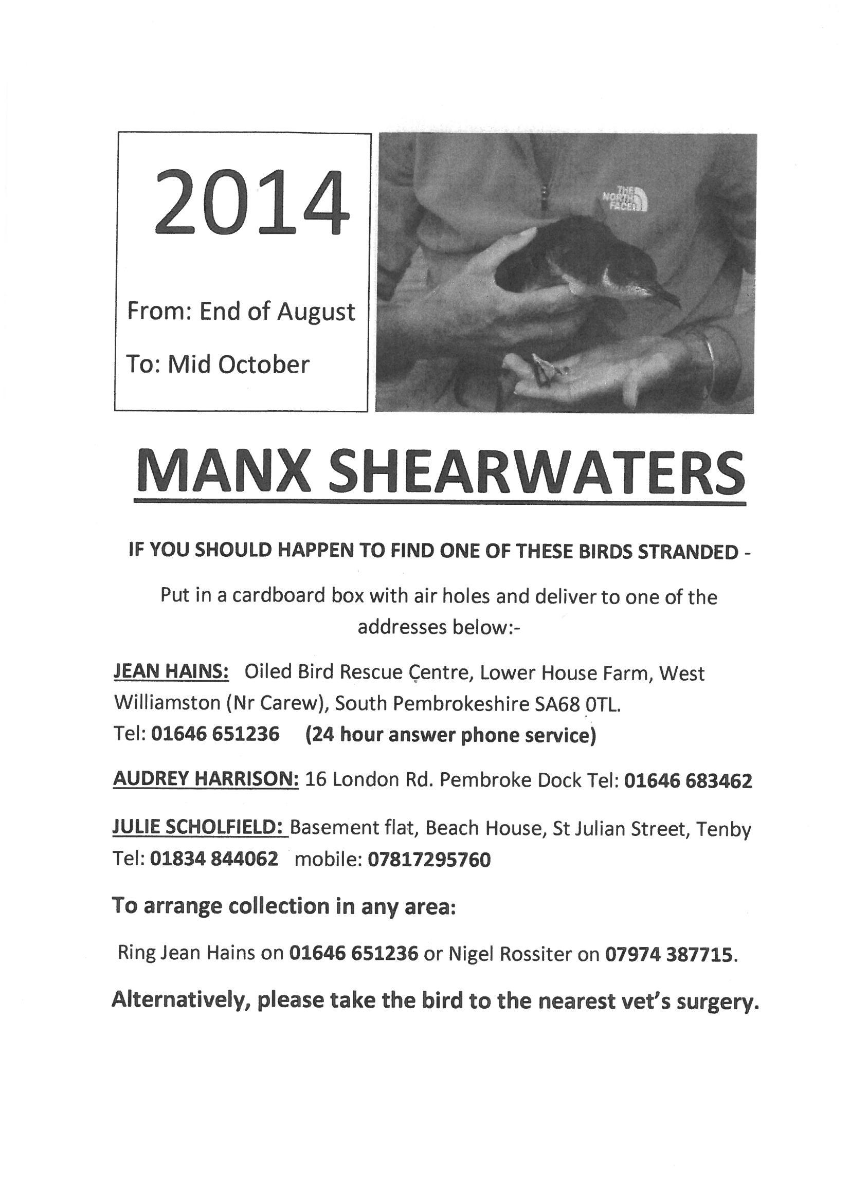 Manx Shearwater 2014